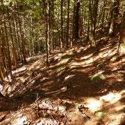 Finalmente nel bosco, qui il sentiero è bello