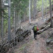 Sentiero per la Capanna Brogoldone
