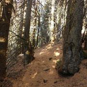 Sentiero per l'Alpe di Motto