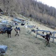 Rifugio Alp de Fora 1844 m