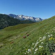 Salita all'Alpe Tom