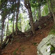 Sentiero Saurù - Domàs