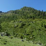 Alp d'Aian 1537 m