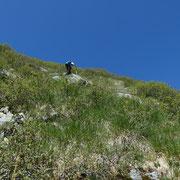 Sul ripido per arrivare in cresta ......