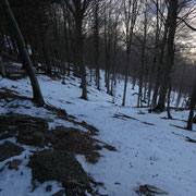 Ripida salita nel bosco