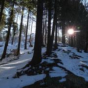 Nel bosco sotto la cima del Bisbino