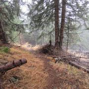 Il sentiero che scende a Stabbiello non sempre è cosi ben visibile ....