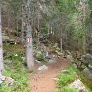 Sentiero per l'Alpe Vignone