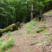 Bel sentiero per l'Alpe di Devré