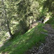 Bosco della Fornace
