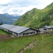 Alpe Cristallina 1800 m