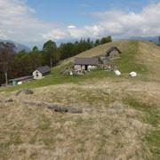 Alpe Pluni (Polunia) 1461 m