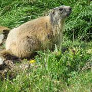 Le marmotte ci hanno fatto compagnie per tutta la giornata