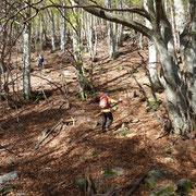 Nel bosco sotto l'Alpe Motarina
