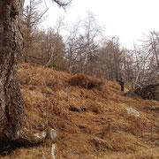 Incontriamo il primo rudere dell'Alpe Faeda