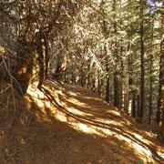 Il bel sentiero per l'Alpe Fossada