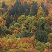Colori dell'autunno ai Monti di Ruscada 1021 m