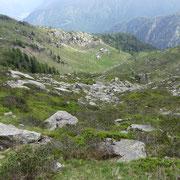 Alp d'Albion