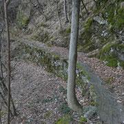 Sul sentiero per Chiazza
