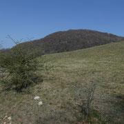 Monte Arbòstora