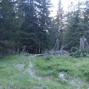 Da Piana (Molare) saliamo nel bosco verso Stou di Sotto