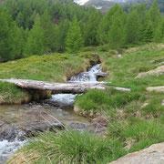 Seguiamo il sentiero che conduce al Passo Bareta