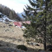 Saliamo all'Alpe di Canee