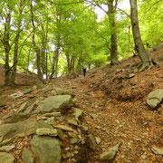 Nel bosco poco prima dell'Alpe Duragno