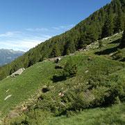 Alpe Gararescio 1783 m