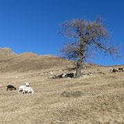 Salita all'Alpe di San Martino