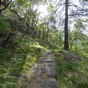 Salita all'Alpe Polunia (Pluni)