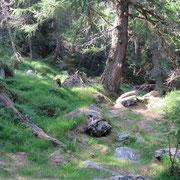 Nel bosco verso l'Alpe di Motto