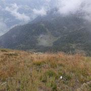 Verso l'Alpe Cara