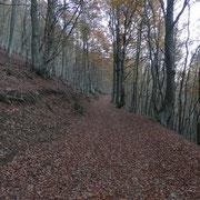 Sentiero per la Capanna Pairolo