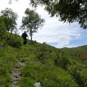 Dall'Alpe Crocc scendiamo direttamente a Muricce