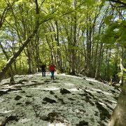 Nel bosco verso i Monti Corno