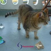 Energetisches Arbeiten mit dem Pyramiden Kraftkreis für Katzen