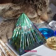 Katzen lieben Lichtkristalle