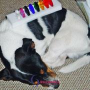 Energetisches Arbeiten mit dem Chakren-Set für Hunde