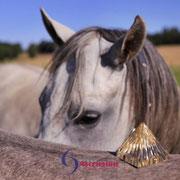 Energetisches Arbeiten mit der goldenen Pyramide mit Pferden