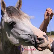 Energetisches Arbeiten mit dem Guardian mit Pferden