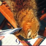 Energetisches Arbeiten mit der Flamme für Katzen