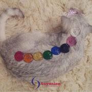 Energetisches Arbeiten mit dem Chakren-Set für Katzen
