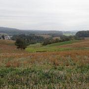 Blick zum Odenwald - Ingo Pedal