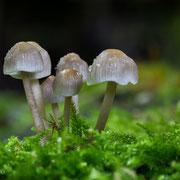 Pilze mit dem Makro-Objektiv fotografiert