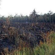 自然に消える野焼き