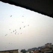 ジャンビの空を舞う燕