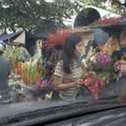 春節お祝いの花を買う