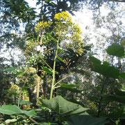 endemische Pflanzenwelt auf Madeira