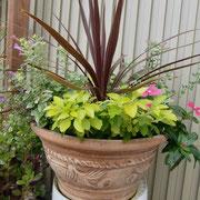 花ともだち金澤先生のアドバイスで作った360度の寄せ植えです。しだれる日日草がポイント!まだこれから